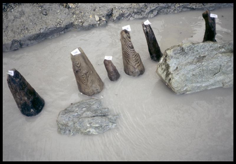 Vue des pieux de bois de la plage in situ (fouille A. Marguet/Drassm).