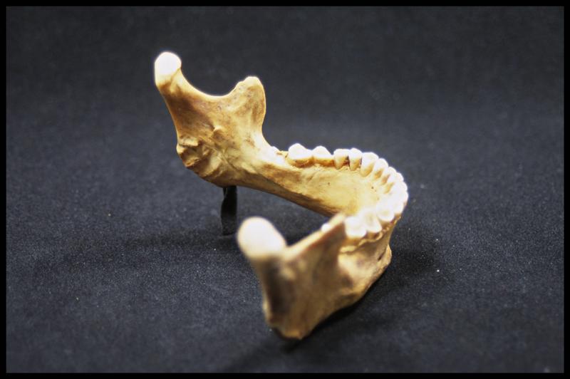Vue du profil droit d'une machoire inférieure humaine (CNRAS).
