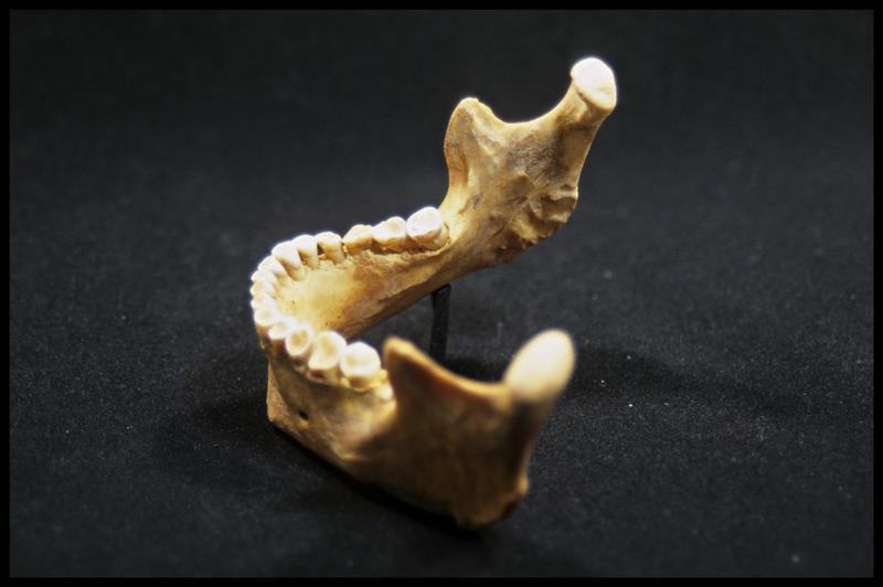 Vue du profil gauche d'une machoire inférieure (CNRAS).