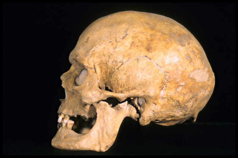 Vue du profil gauche d'un crâne humain (CNRAS).