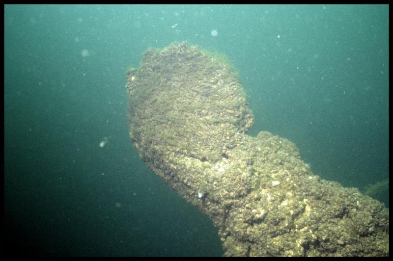 Vue sous-marine du rode avant la fouille (fouille E. Rieth).