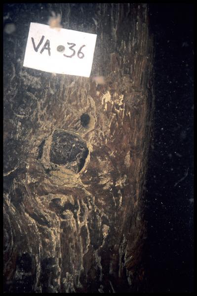 Vue sous-marine de détail du chevillage de la varangue V36 (fouille E. Rieth).