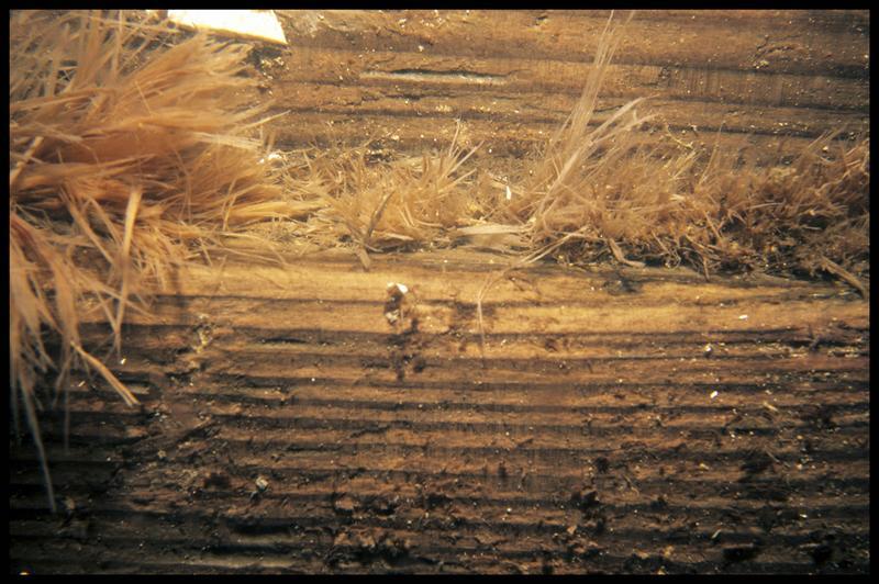 Vue de détail du calfatage entre les bois de la carène (fouille E. Rieth).