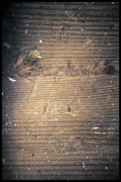 Vue sous-marine du calfatage entre deux virures de la carène (fouille E. Rieth).
