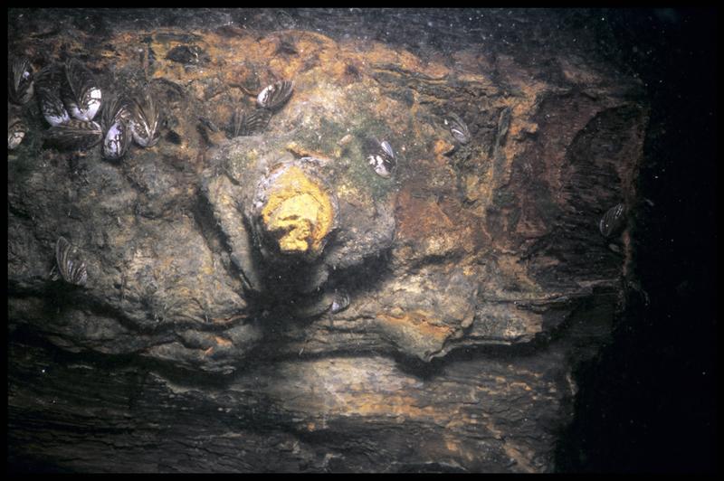 Vue sous-marine d'une pièce métallique in situ (fouille E. Rieth).