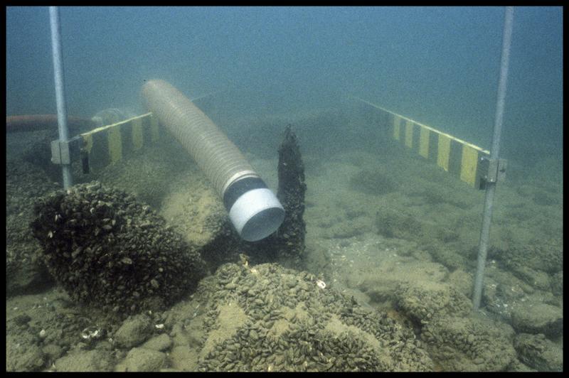 Vue sous-marine d'un pieu de bois et de la suceuse à eau (fouille A. Marguet/Drassm).
