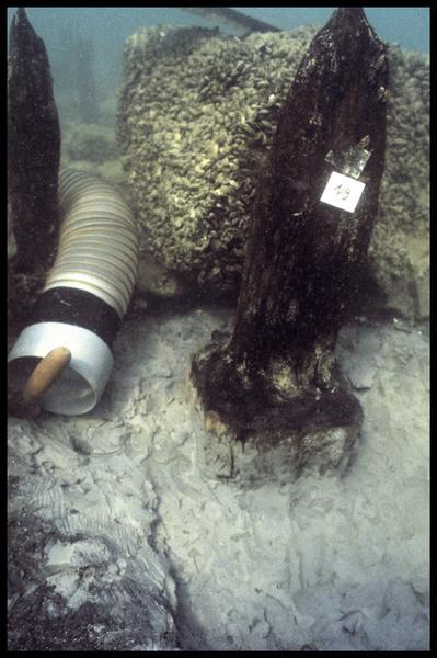 Vue sous-marine du pieu de bois 19 in situ (fouille A. Marguet/Drassm).