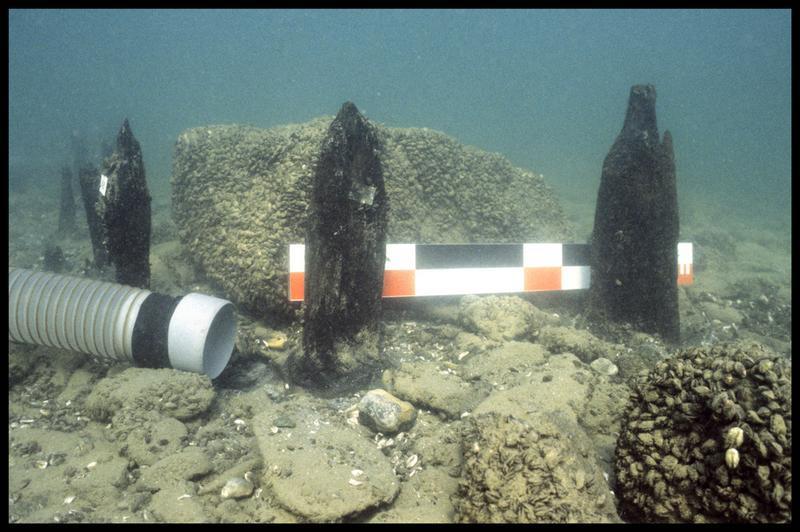 Vue sous-marine de quatre pieux de bois in situ (fouille A. Marguet/Drassm).