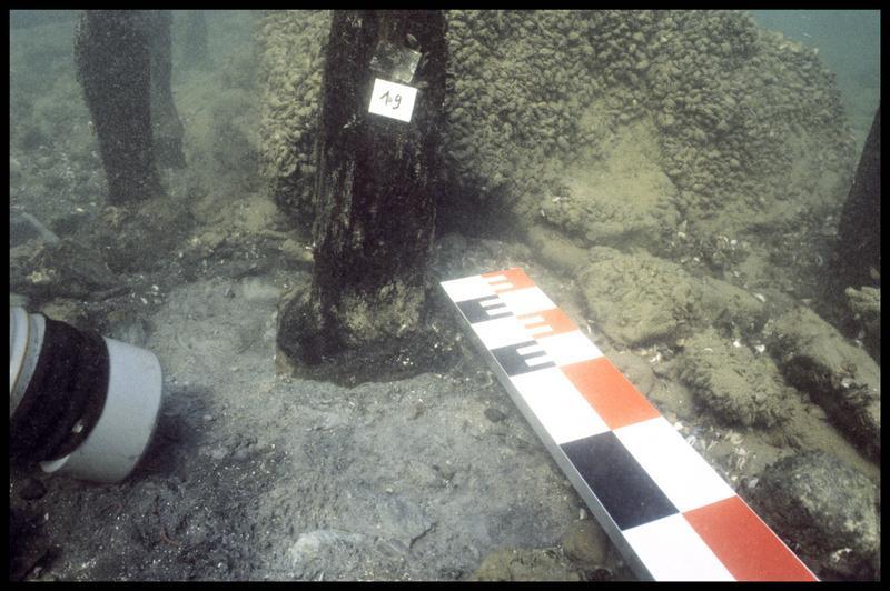 Vue sous-marine de détail du pieu de bois 19 in situ (fouille A. Marguet/Drassm).