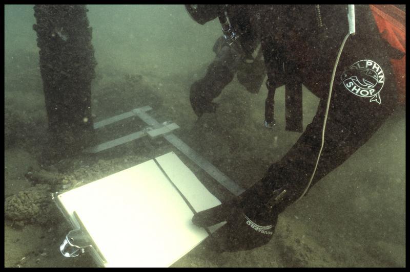 Vue sous-marine d'un plongeur effectuant les mesures d'un pieu de bois in situ (fouille A. Marguet/Drassm).
