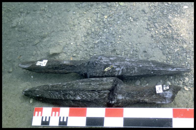 Vue des pieux de bois 06 et 08 à leur sortie de l'eau (fouille A. Marguet/Drassm).