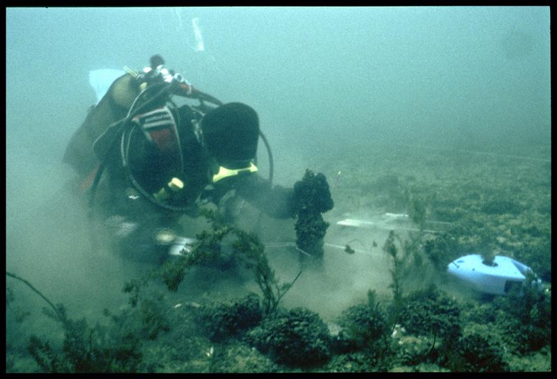 Vue sous-marine d'un plongeur effectuant le relevé d'un pieu de bois (fouille A. Marguet/Drassm).