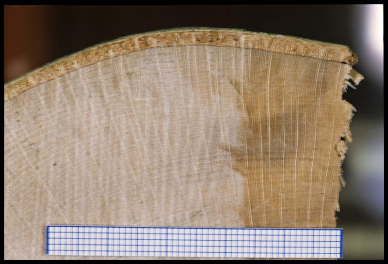Vue de détail d'un rondin de hêtre (CNRAS).