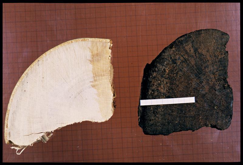 Vue de deux fragments de hêtre, à droite daté bronze final et actuel à gauche (CNRAS).