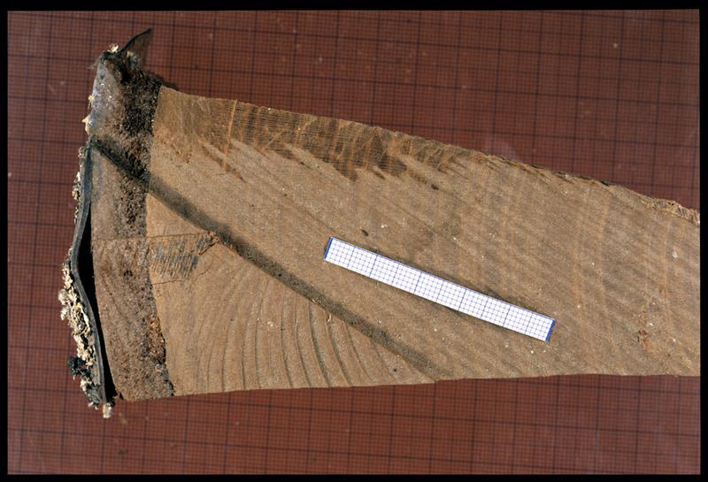 Vue d'un fragment de rondin de cerisier (CNRAS).