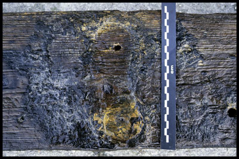 Vue de détail des traces de cloutage sur une pièce de bois (fouille E. Rieth).