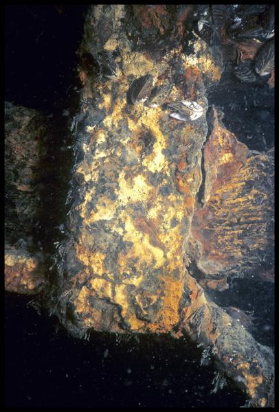 Vue sous-marine d'un élément de la carène (fouille E. Rieth).