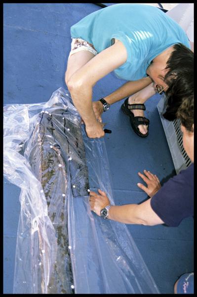 Vue du relevé à l'échelle 1 sur film transparent de pièce de bois (fouille M-P. Jézégou/Drassm).