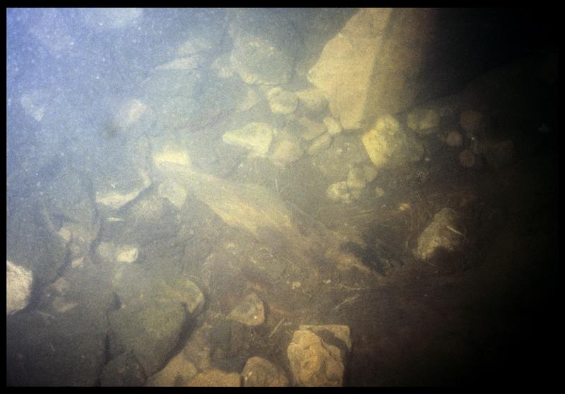 Vue sous-marine d'un pieu de bois in situ (fouille P. Grandjean/Drassm).