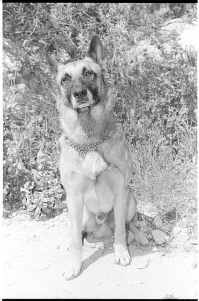 Vue du chien Baron du gardien du Fort Saint Jean (Bernard Orlicki).