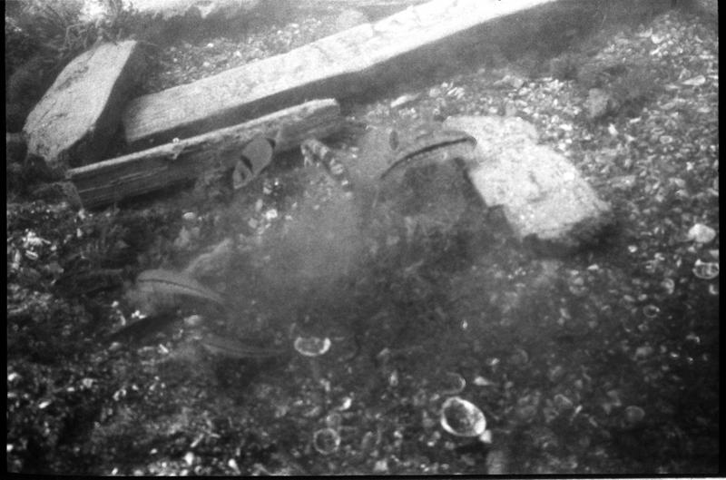 Vue sous-marine des girelles sur la carène (fouille J-M. Gassend).