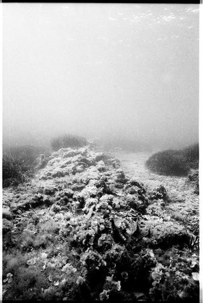 Vue sous-marine de la carène (fouille A. Taniou).
