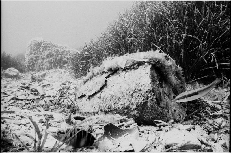 Vue sous-marine d'un pot de céramique in situ (fouille A. Taniou).