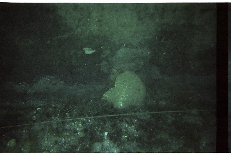Vue sous-marine d'un fragment d'amphore in situ (fouille M. Guyon).