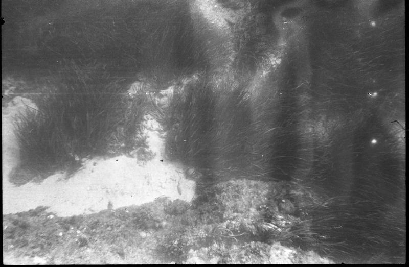 Vue sous-marine de la table concrétionnaire in situ (fouille L. Long/Drassm).
