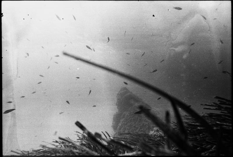 Vue sous-marine des poissons in situ (fouille L. Long/Drassm).