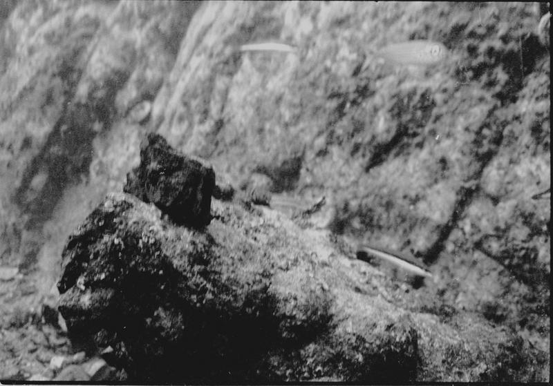 Vue sous-marine des lingots de fer in situ (fouille L. Long/Drassm).