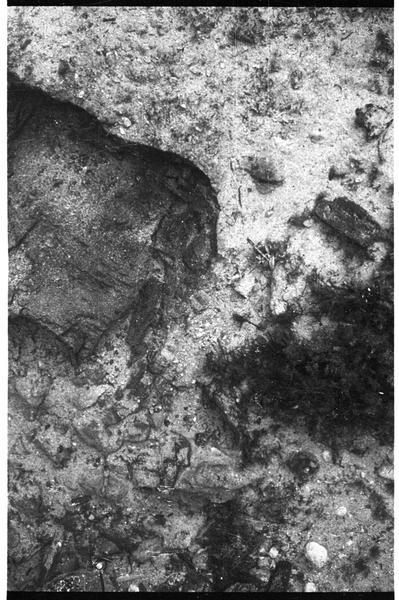 Vue sous-marine de détail de la table concrétionnaire (fouille L. Long/Drassm).