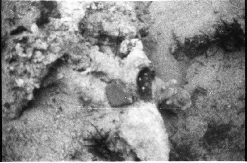 Vue sous-marine d'une concrétion métallique in situ (fouille L. Long/Drassm).