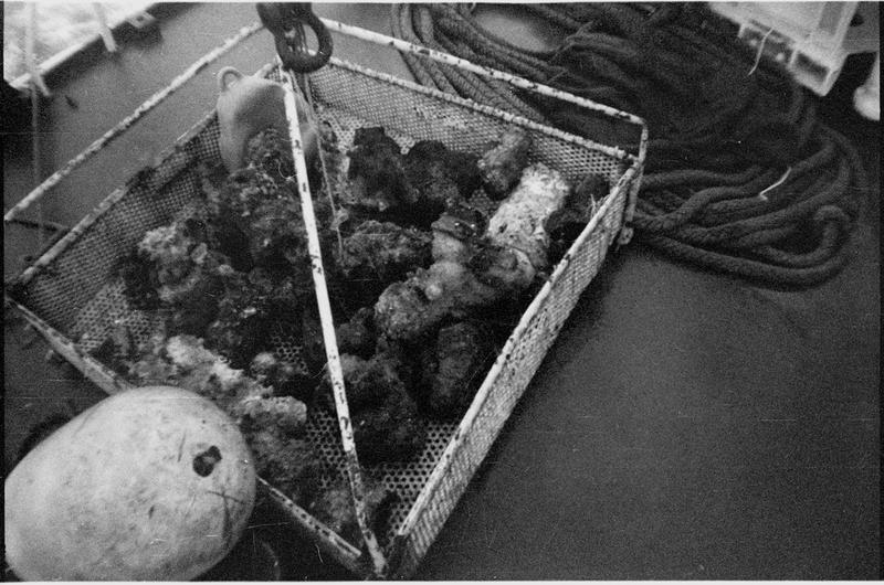 Vue des concrétions métalliques à leur remontée (fouille L. Long/Drassm).