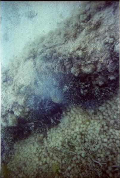 Vue sous-marine des gorgones (fouille L. Long/Drassm).