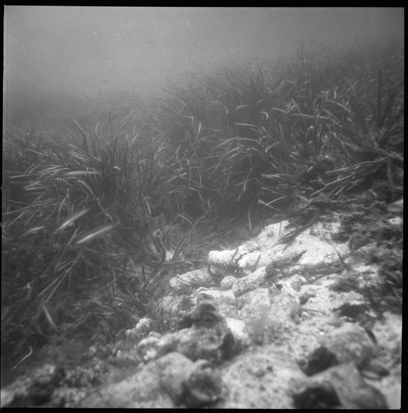 Vue sous-marine des lingots de fer (fouille L. Long/Drassm).