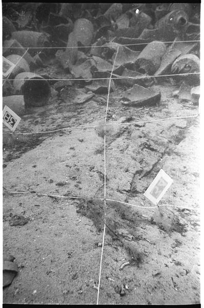 Vue sous-marine du carroyage et des amphore in situ (fouille A. Tchernia).