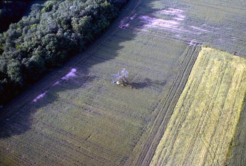 Vue du secteur ouest du site de Roussac.