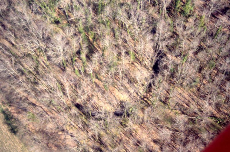 Motte castrale