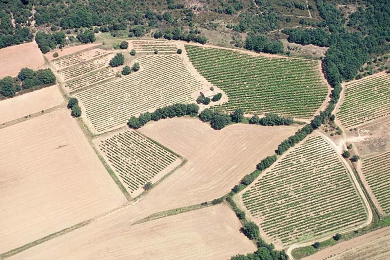 Oléiculture ; villa