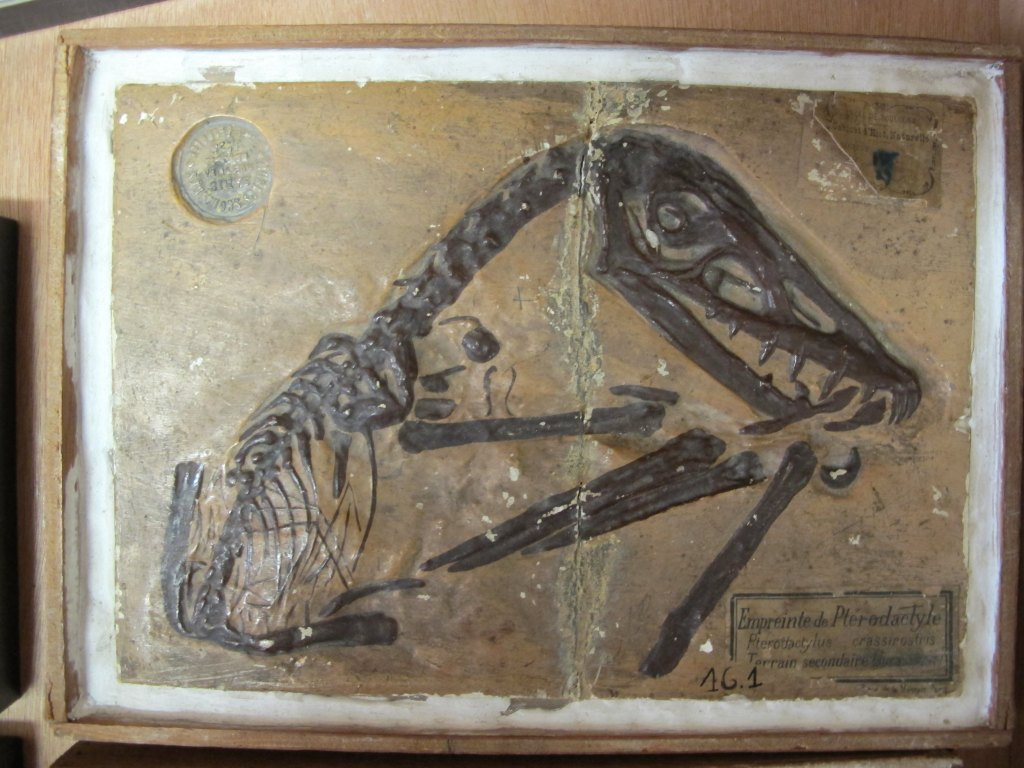 Ensemble d'objets de représentation scientifique et pédagogique fossile
