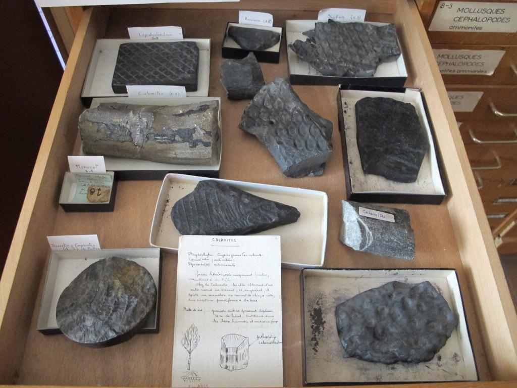 Ensemble de fossile