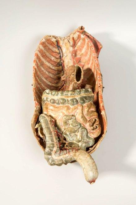 Ensemble d'objets de représentation d'organes du corps humain