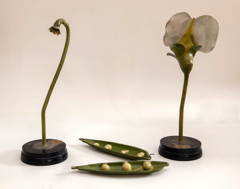 Objet de représentation d'un organisme végétal
