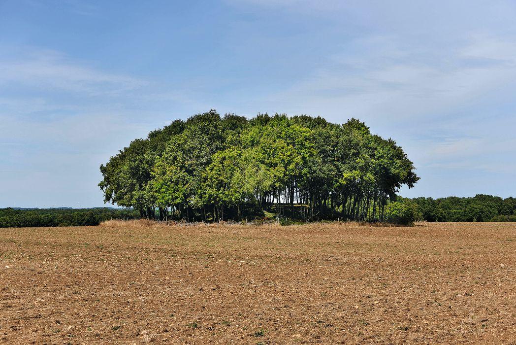 Tumulus dit le Vieux Breuil: Vue générale du site