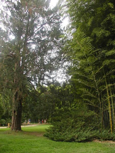 Domaine de la Bambouseraie de Prafrance