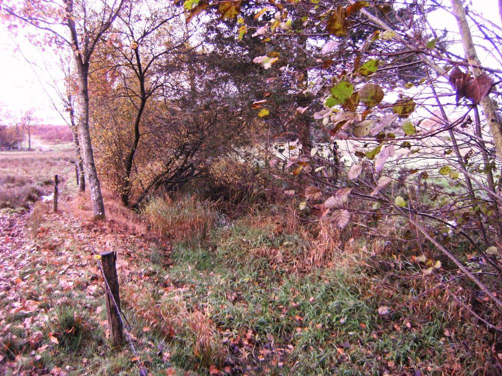 7 novembre 2010, la bifurcation vue vers le Sud.