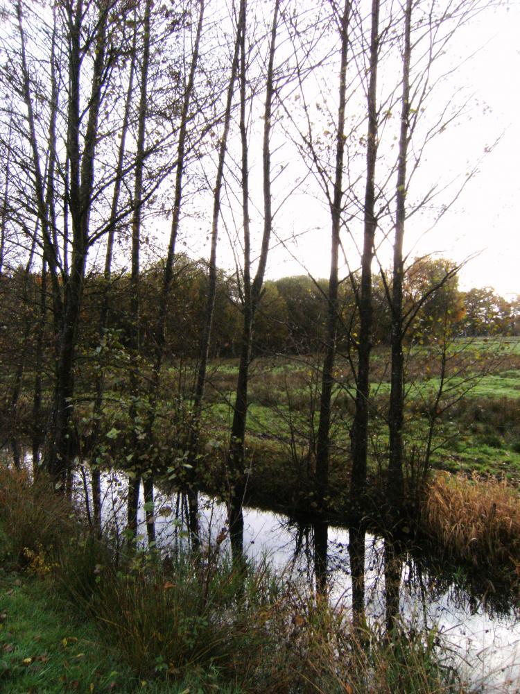 7 novembre 2010, le canal d'alimentation dans sa première section, photo prise vers le Sud-Est.
