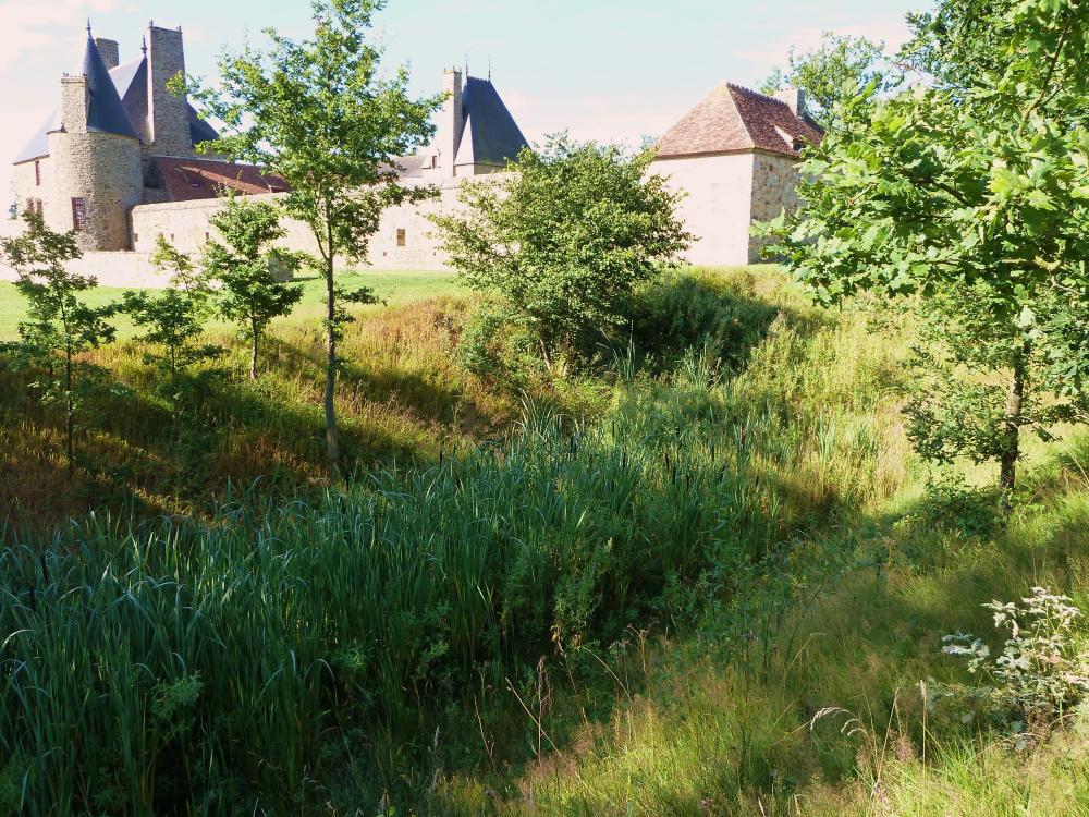 1er août 2011, les roseaux en fond de douve.
