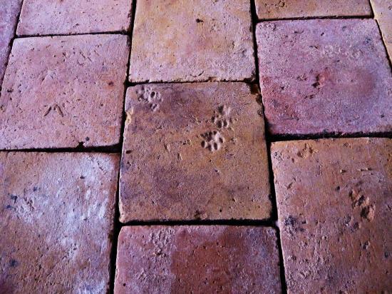 25 septembre 2011, qui de nous est assuré, comme ce chat du Beaujolais, que la Terre portera encore la trace de son passage trois siècles après notre disparition?